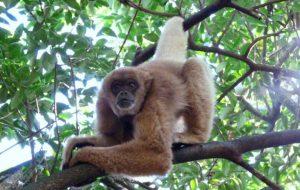 Fundação Florestal regulamenta observação de primatas em unidades de conservação