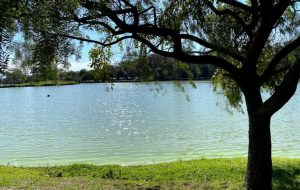 Parques urbanos estaduais na Grande SP reabrem aos fins de semana e feriados
