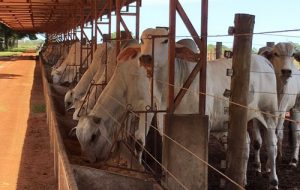 Pesquisa com participação da Agricultura de SP é reconhecida por revista científica