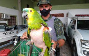 PM Ambiental resgata aves silvestres que eram mantidas em cativeiro de forma ilegal