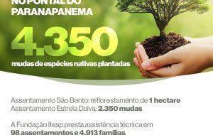 Fundação Itesp viabiliza ações de reflorestamento no Pontal do Paranapanema