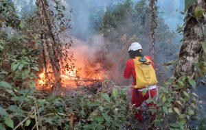 Governo de SP promove campanha de conscientização para prevenir incêndios florestais