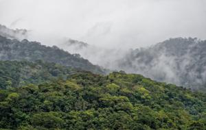 Fatec Jahu faz Simpósio de Inovação e Tecnologia em Florestas